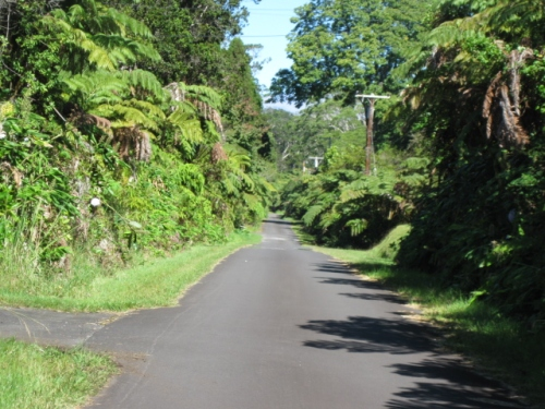 A road near Volcano Village, the lower slopes of Mauna Loa