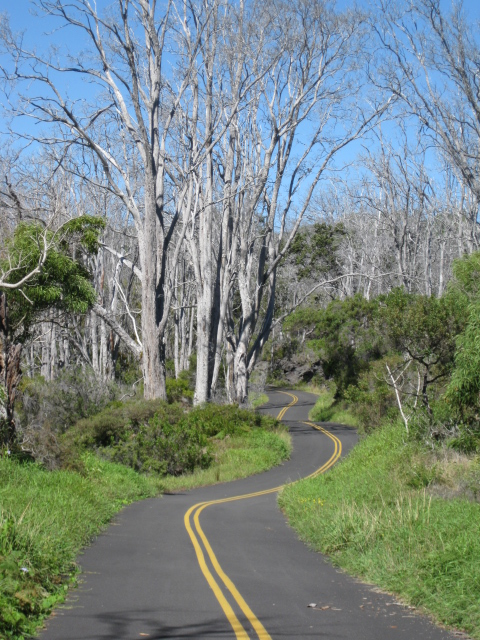Mauna Loa Road up to the lookout. This is the area that looks like a ghost forest, with dead trees bleached white